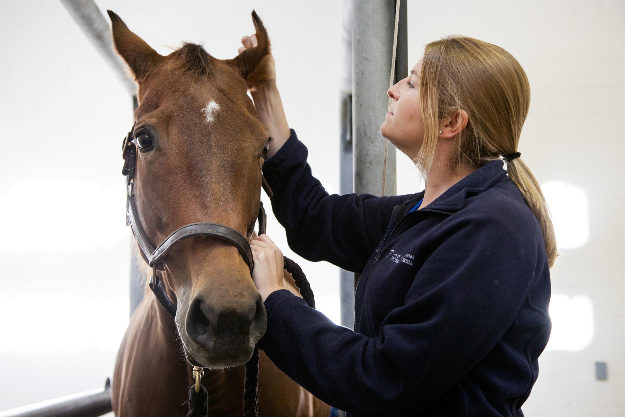 medical imaging cloud PACS for equine veterinarians