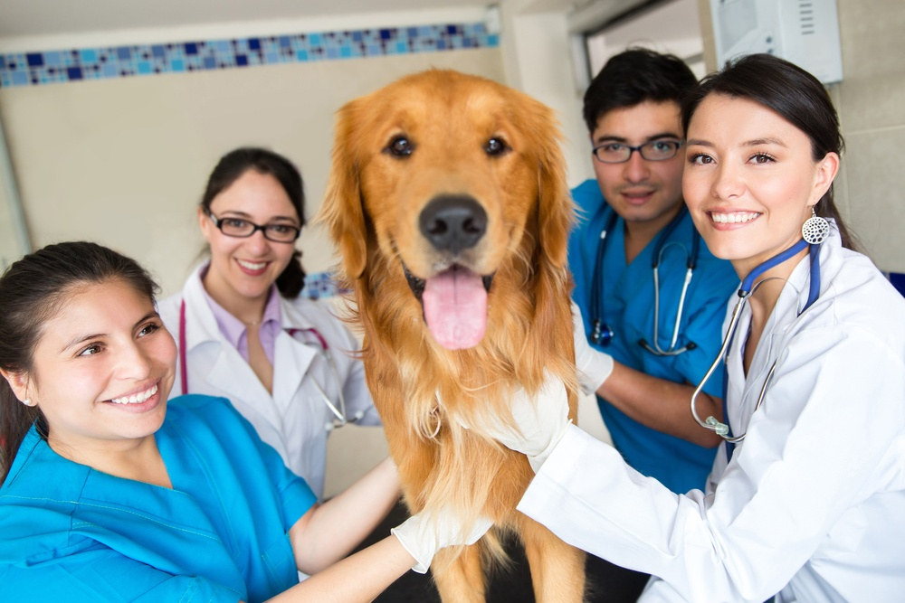 Veterinary Cloud PACS for Sharing Images